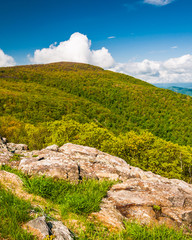Spring colors on a mountain in Shenandoah National Park, Virgini