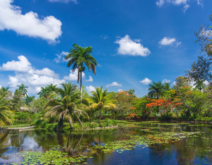 tropical landscape