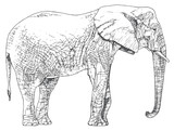 Hand drawn elephant.