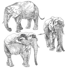 Set of hand drawn elephants.