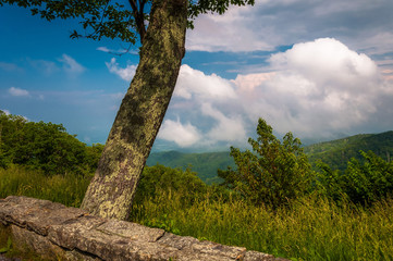 Tree and view of the Appalachian Mountains from Skyline Drive in