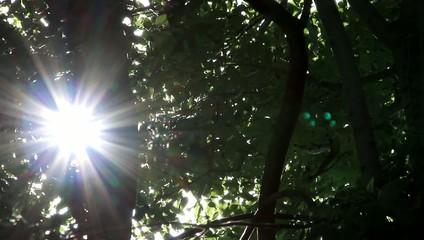 Sonnenstrahlen glitzern durch Blätter an einem Baum
