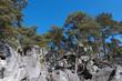Pins et chaos rocheux forêt de fontainebleau