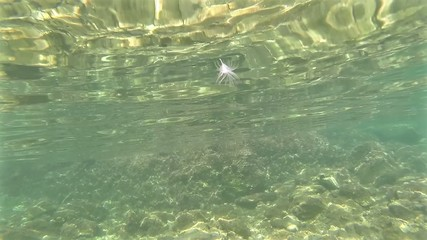 Feather falls into the water, underwater view