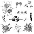 set of flower sketch vector,free hand drawing doodle sketch