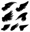 Wings - 75019256