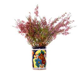 heather calluna vulgaris herb isolated