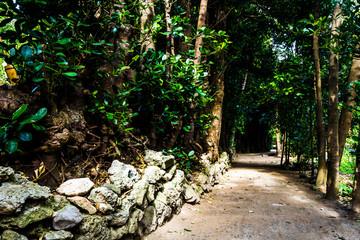 沖縄 フクギ並木