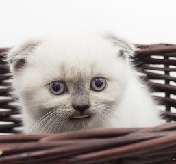 funny kitten in a wicker basket on a white background