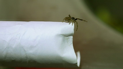 spider climbing up to the edge of the paper