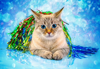 Cat with Christmas decoration against blue background