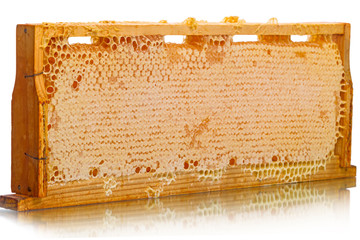 Wood Cells of the hive with honey