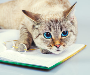 Business cat with glasses and notebook (book)