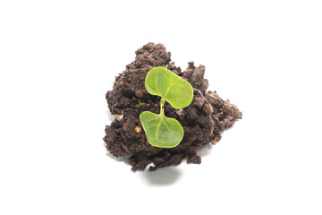 soil with green seedling isolated on a white background