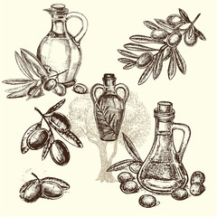 hand draw olive