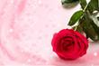 Obrazy na płótnie, fototapety, zdjęcia, fotoobrazy drukowane : Red rose