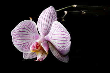 Low key blooming orchid
