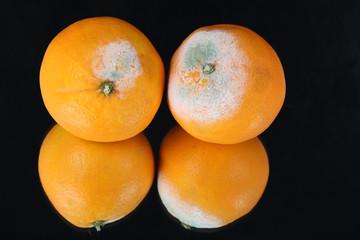 Schimmlige Orangen