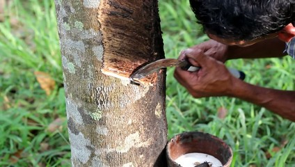 Rubber Tapping in Thailand