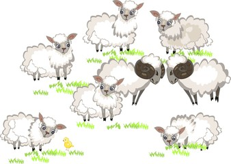 Flock of sheep and two ram