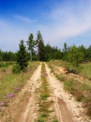 Road in Russian taiga