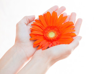 young woman holding flower in her hands, selective focus