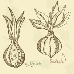 Vegetables  drawn onion and radish