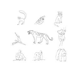 leopard, monkey, cat, lemur, koala, gorilla, bear, sloth