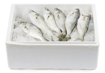 Fish in Transportation Box