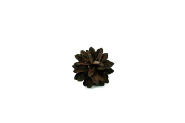 Pine cone. Isolated object on white background.