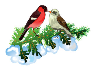 Bullfinches on Christmas tree branch