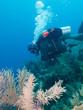 scubadiver undersea, Cuba