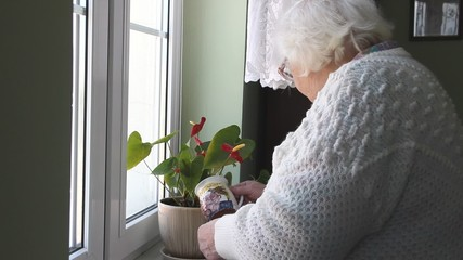 An old woman is checking and watering flower