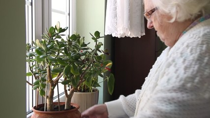 An old woman places flower pot on the window and checks plant