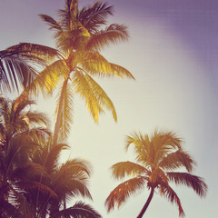 beautiful instagram of palm trees with sun setting behind them