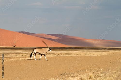 In de dag Antilope Sossusvlei park, Namibia