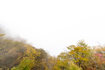Autumn leaves in the fog