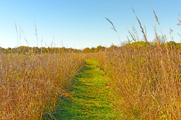 Quiet Path in to the Prairie