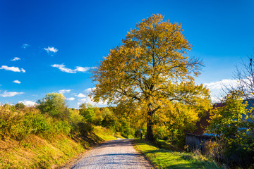 Colorful tree along a country road in rural York County, Pennsyl