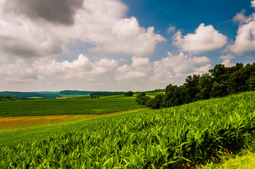 Corn field and rolling hills in rural York County, Pennsylvania.