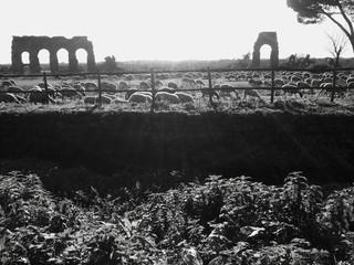 Pecore al parco degli Acquedotti in Roma