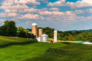 Corn fields and silos on a farm in Southern York County, Pennsyl