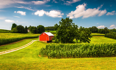 Cornfield and barn on a farm in Southern York County, Pennsylvan