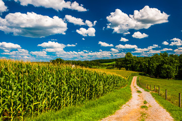 Cornfield and driveway to a farm in rural Southern York County,