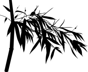 black bamboo branch silhouette isolated on white