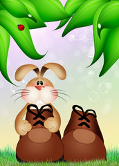 rabbit in the shoe