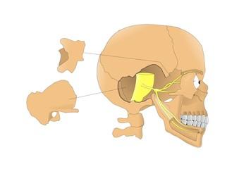 Trigemino, quinto paio dei nervi cranici