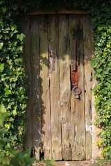 Wooden door overgrown with ivy