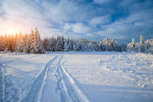 Foto op Canvas Bossen the winter road