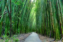 "Постер, картина, фотообои ""Bamboo forrest"""